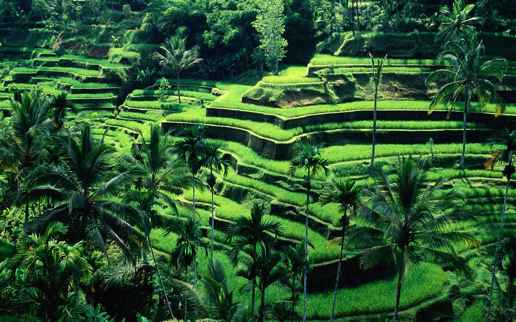 Bali, An Adventure Without End