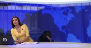 When a LABRADOR decides to show up on the news with surprise!