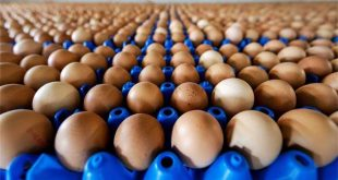 Netherlands launches food alert because of contaminated eggs