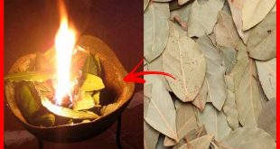 Not imagine the benefits of burning bay leaves home!