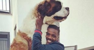 Der Hund ist William Carvalho… ENORMOUS!!!