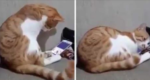 Cat's reaction to see video of the deceased owner moved the world